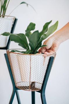Few things to consider when choosing a houseplant, including how to get it home without killing it! Diy Garden Projects, Growing Herbs, House Plants, Planter Pots, Bulb, Bloom, Handmade Gifts, Shapes, Glass Houses