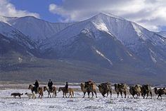 Horses Are the most used For traveling in Mongolia