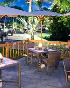 Elephant Safari Park Lodge  ( Bali, Indonesia )  Set 30 minutes north of Ubud, the Elephant Safari Park Lodge is home to 29 pachyderms. #Jetsetter #JSElephant