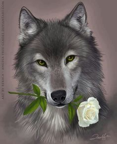 wolf with white rose Anime Wolf, Beautiful Wolves, Animals Beautiful, Cute Animals, Wolf Photos, Wolf Pictures, Wolf Wallpaper, Animal Wallpaper, Tier Wolf