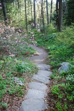 1000 images about woodsy garden on pinterest woodland garden gardens and paths for Garden in the woods framingham ma