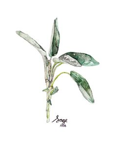 Hey, I found this really awesome Etsy listing at https://www.etsy.com/listing/188693675/sage-herb-painting-print-from-original