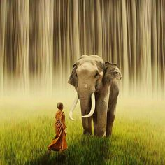 Elephant and Monk