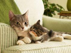 mères chatte serrée