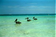 If you're looking to escape the crowds of the Riviera Maya, don't miss Puerto Morelos, just 20 minutes south of Cancún