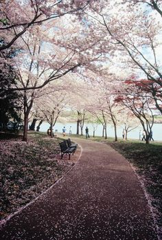 I've been here but not during the cherry blooming time. Can't wait to see it like this in a few years!!