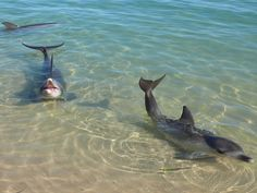 Monkey Mia, Western Australia - dolphins come in daily and interact with visitors