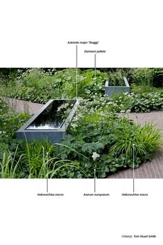 Steel water basin with loose woodland planting at its feet. Could also be a raised bed. Steel water basin with loose woodland planting at its feet. Could also be a raised bed. Back Gardens, Small Gardens, Outdoor Gardens, Landscape Elements, Landscape Design, Mediterranean Garden Design, Planting Plan, Home Vegetable Garden, Foliage Plants