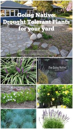 Front Yards Excellent guide to landscaping with native drought tolerant plants. - Given our current drought situation in Southern California, THIS was the best year to take out our front lawn and put in native, drought tolerant plants. My cit… Front Yard Plants, Front Yard Landscaping, Landscaping Ideas, Mulch Landscaping, Backyard Ideas, Mulch Ideas, Landscaping Contractors, Landscaping Software, Diy Jardin