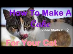 This is a quick and easy recipe! Learn how to make a birthday celebration cake for your pet cat with healthy coconut flour. Cake Recipe For Cats, Birthday Cake For Cat, Birthday Ideas, Happy Birthday, What Cats Can Eat, Cat Brain, Coconut Flour Recipes, Youtube Cats, Cat With Blue Eyes