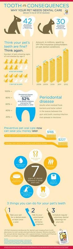 Why your pet needs dental care