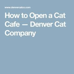 How to Open a Cat Cafe — Denver Cat Company
