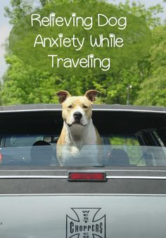 DIY Pets : Relieving Dog Anxiety While Traveling Dog anxiety can be a horrible thing for both your pet and for you. There are a few ways to address dog anxiety that can help make life easier. Sharing is caring, don't forget to share ! Dog Separation Anxiety, Dog Anxiety, Anxiety Help, Dog Health Tips, Pet Health, Mental Health, Health Care, Dog Care Tips, Pet Care
