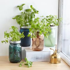 this major jar DIY herb garden is perfect for keeping fresh herbs growing right in the kitchen. DIY herb garden looks stunning in your kitchen Herb Garden Kit, Herb Garden In Kitchen, Kitchen Herbs, Home Vegetable Garden, Fruit Garden, Mason Jar Herb Garden, Spice Garden, Bottle Garden, Herbs Garden