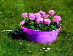 I love the purple tub planter Pretty Flowers, Purple, Pink, Flower Arrangements, Planters, Beautiful, Bouquets, Window, Tub