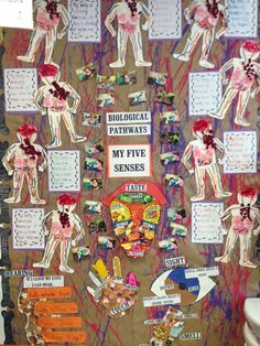 The body and five senses wall display