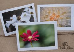 Flowers Card Pack... 3 cards...Hot Pink Cosmo, Dogwood and Dandelion...Fine Art Photography Greeting Cards