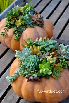 #Succulent pumpkin centerpiece how-to from Flower Duet Floral Designer Kit Wertz. Sign up for our free monthly floral design newsletter and find out how to make this gorgeous pumpkin planter on November 1st 2013. Sign up at http://flowerduet.com/newsletters/ #FinishWithFlowers
