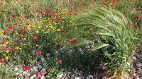 by Yair Tours Israel © 2015 Yair Nabet: Spring in Israel