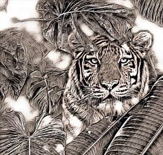 #animalsareart Leopards, Big Cats, Dreamworks, Lions, Favorite Things, Photo And Video, Natural, Animals, Instagram