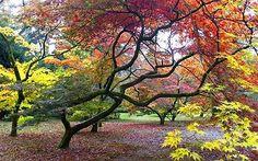 Autumn walks - ten of Britain's best: Westonbirt Arboretum