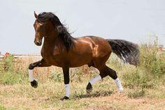 ★ MUNDO DEL CABALLO CRIOLLO COLOMBIANO ★: Los traumas en los caballos