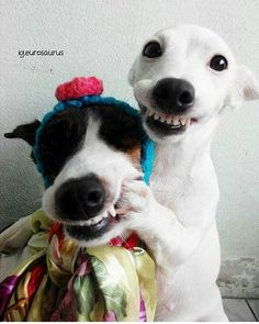 Haha 'Smile!' | Photo by @eurosaurus #cubanimals  This looks just like Peanut and daisy!!!