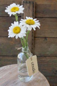Three Little Daisies...