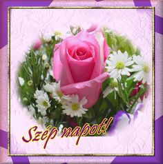 Good Morning, Rose, Flowers, Film, Art, Buen Dia, Movie, Art Background, Pink