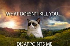 Yep. Grumpy Cat. We love you to the end of the earth...yes, the end, which means we die. You'd love that, Grumpy Cat. And I'm sorry for that terrible pun.