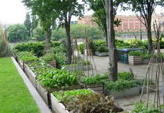 Italian winter greens | Kitchen vegetable garden | jardin potager | bauerngarten | köksträdgård