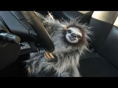 Funny Sloths Having a Great Day in Video Compilation - Sloth Of The Day Watch Funny Videos, Funny Animal Videos, Funny Animal Pictures, Happy Animals, Animals And Pets, Funny Animals, Cute Animals, Crazy Animals, Baby Sloth