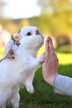 Bunny Has a Springtime Photo Shoot Outdoors 3