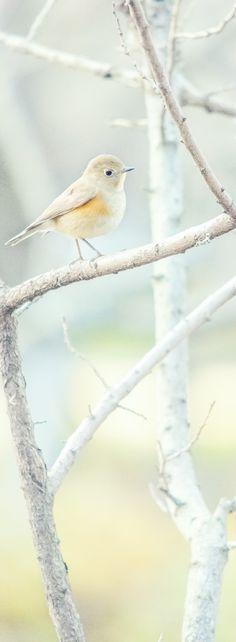 "look bird ""haru iro"" (photography by Yukihiro Yoshida) http://digianalogue.com"
