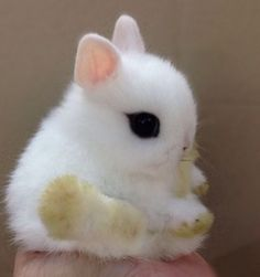 I have always really wanted one of these. They're the cutest thing eva.