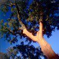 APCOR - image bank  Cork oak after harvesting