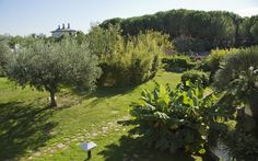 #panoramic #view #room Clean Beach, Pula, Beaches, Golf Courses, Rooms, Italy, Island, Outdoor Decor, Beautiful