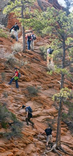 Al Hartmann     Tribune file photo  Hikers carefully make their way along a section of the Angels Landing Trail in Zion National Park in March 2009. The trail takes visitors up a steep rock spine that climbs to a magnificent view of the Virgin River and Zion Canyon below. An anchor chain is embedded in the rock in steep places along the trail that hikers can grab onto for safety.