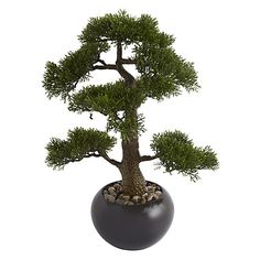 Buy Bonsai Tree in a Stone Pot Online at johnlewis.com