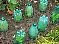 15 Gardening Tricks To Make Your Neighbors Jealous