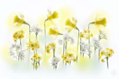 Photograph Spring Abstract by Jacky Parker on 500px