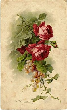 Red roses and grapes, Catherine Klein Vintage Rosen, Vintage Diy, Vintage Images, Catherine Klein, Vintage Flowers, Vintage Floral, Flower Prints, Flower Art, Rose Art