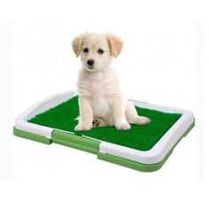 Puppy Potty Grass Indoor Dog Potty Dog Toilet Indoor Grass Potty Trainer Mat NEW for sale online Dog Training Pads, Training Your Dog, Training Collar, Agility Training, Dog Agility, Training Tips, Training Schedule, Crate Training, Training Equipment