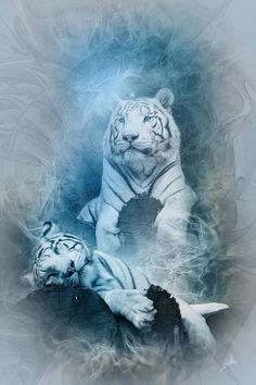 Mother White Tiger and Her Napping Cub. Beautiful Cats, Animals Beautiful, Cute Animals, Wild Animals, Big Cats Art, Cat Art, Tiger Pictures, Animal Pictures, Lion Tigre