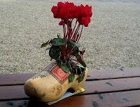 на селе до сих пор ходят в старинной национальной обуви — деревянных башмаках кломпах. Red Flowers, Glass Vase, Plants, Blog, Holland, City, Garden, The Nederlands, Garten