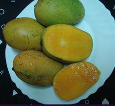 Native Mango(Taiwan).Aroemanis(Indonesia).Keit.Golek (Indonesia) .Lancetilla.Nam Doc Mai.Alphonso. Condo Mangos,Valencia Pride.Irwin