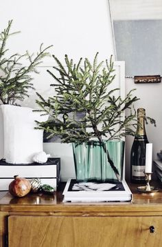 evergreen branches in holiday decor.