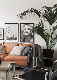 Scandinavian inspired living room with black and white photography and a large indoor plant