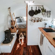 Kashia is lying in a sunbeam within @briskventure's 1955 Airstream  This tiny, mobile home is completely off-grid with composting toilet, solar energy and wood-fired stove!! #AirstreamDreams