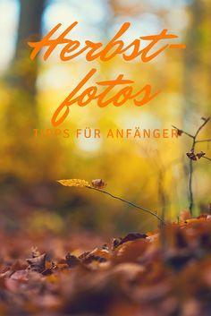 Fotografie-Tipps für Anfänger - schöne Herbstbilder machen!